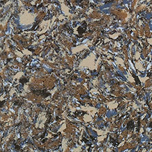 Кварц Scorino Quartz Surface Siena Gold
